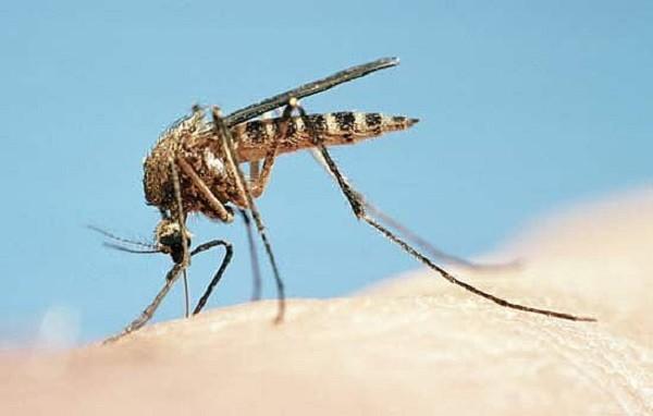 mosquito_bites-26114