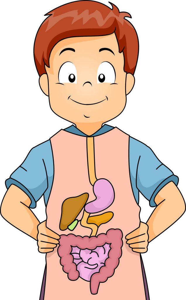 Đường ruột trẻ nhỏ có những đặc điểm sinh lý giải phẫu gì?